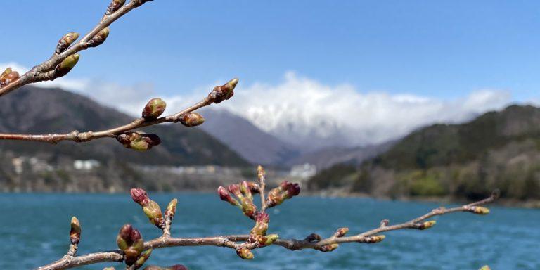 4月の赤谷湖畔